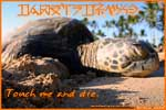 Thumbnail of a napping honu postcard.