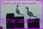 Thumbnail of two chatty seagulls.