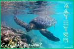 Thumbnail of a swimming honu postcard.