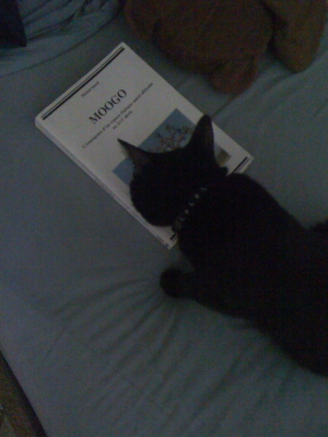 Keli getting cosy with a book.